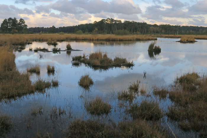 Thursley_2